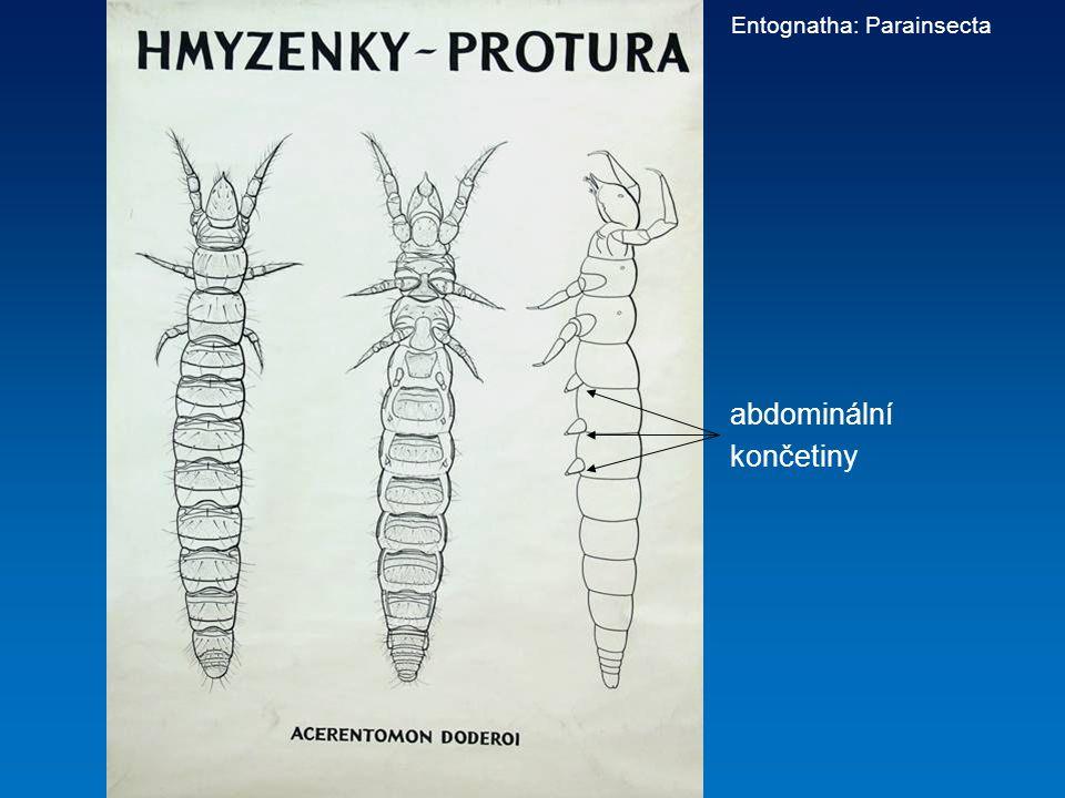 Entognatha: Parainsecta