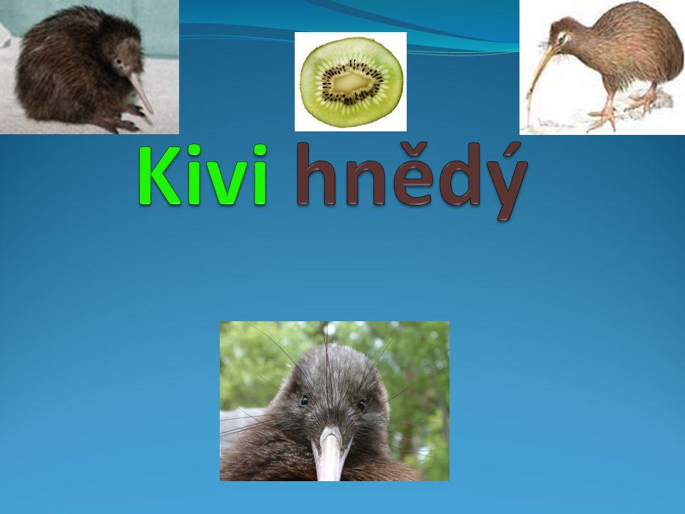 Kivi hnědý