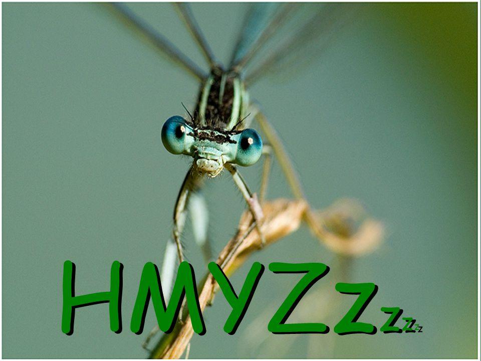 HMYZzzzz