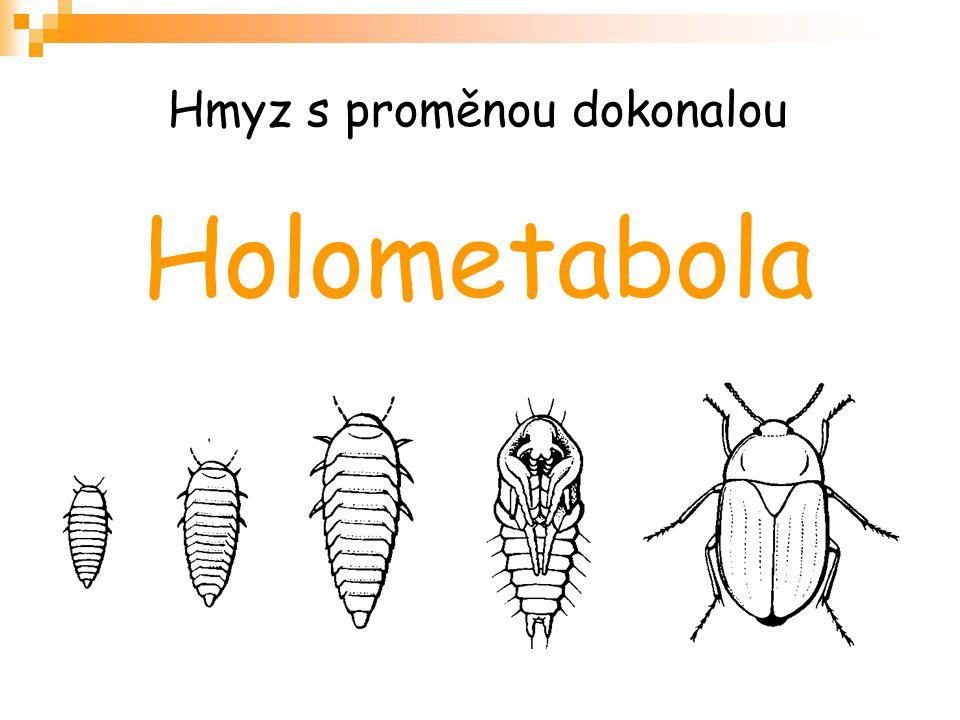 Hmyz s proměnou dokonalou Holometabola
