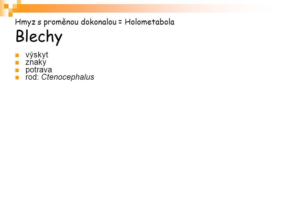 Hmyz s proměnou dokonalou = Holometabola Blechy