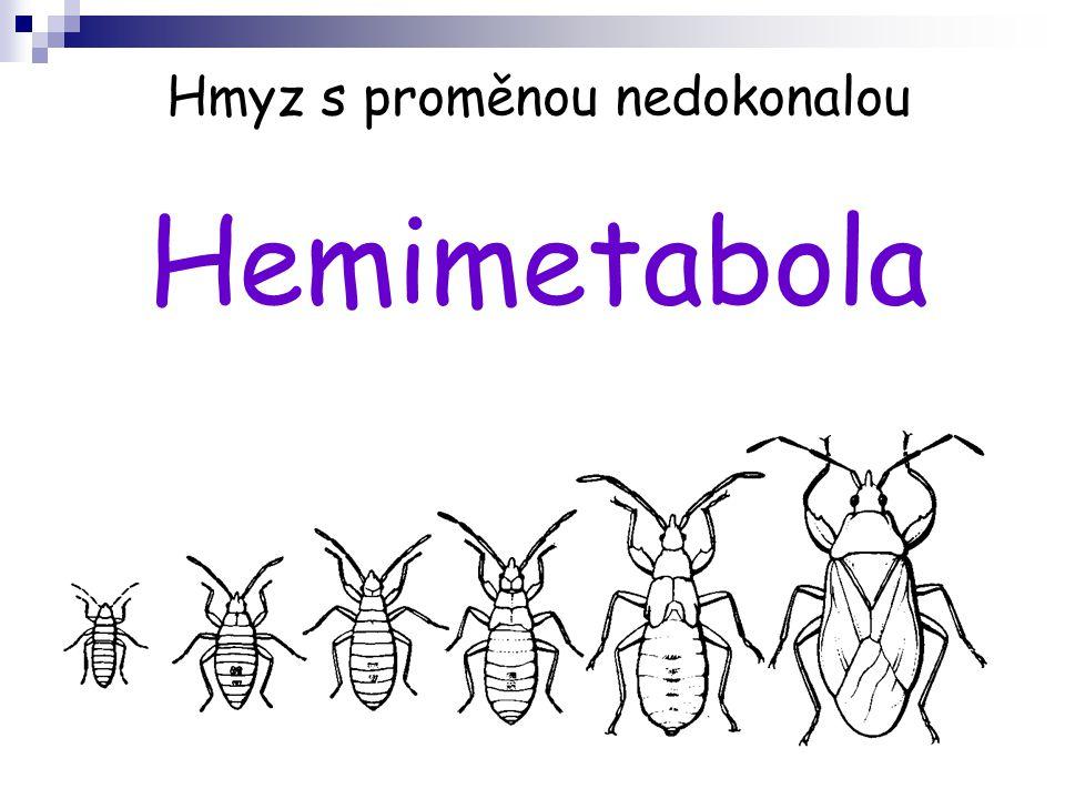 Hmyz s proměnou nedokonalou Hemimetabola