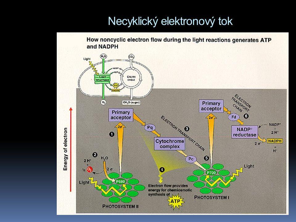Necyklický elektronový tok