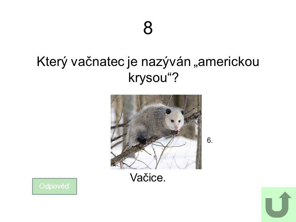 """Který vačnatec je nazýván """"americkou krysou"""