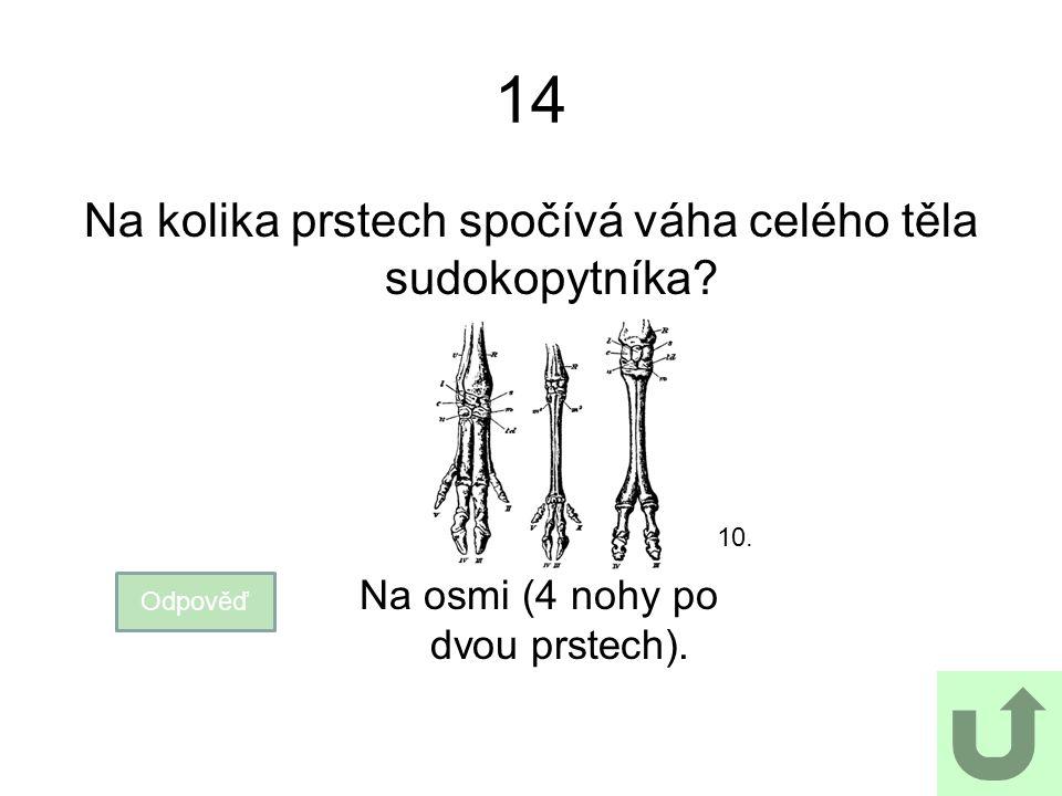 14 Na kolika prstech spočívá váha celého těla sudokopytníka