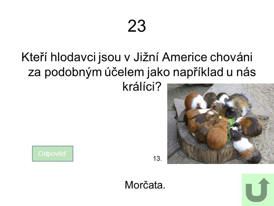 23 Kteří hlodavci jsou v Jižní Americe chováni za podobným účelem jako například u nás králíci 13.