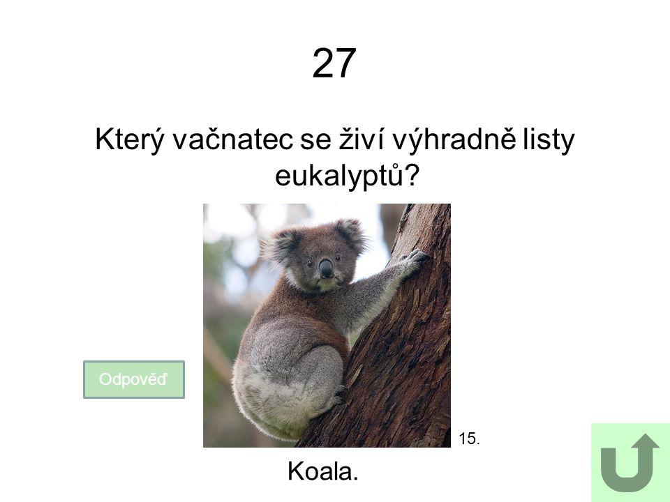 Který vačnatec se živí výhradně listy eukalyptů