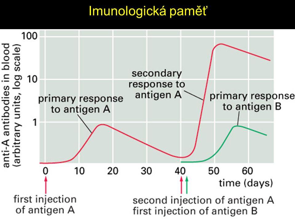 Imunologická paměť