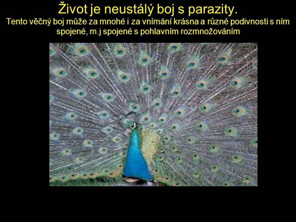 Život je neustálý boj s parazity