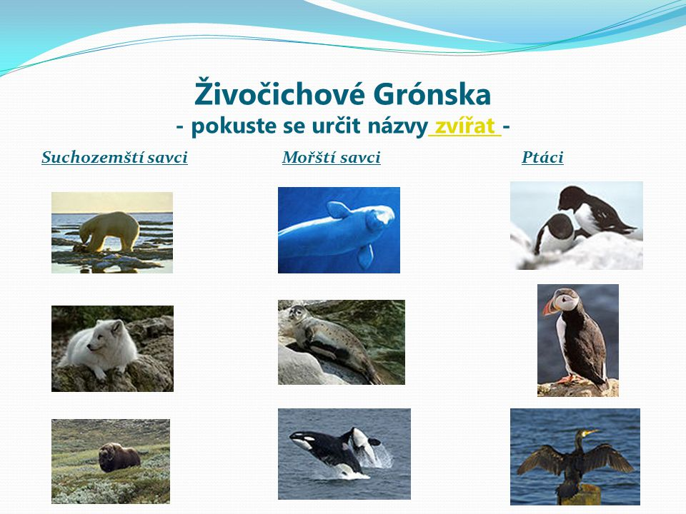 Živočichové Grónska - pokuste se určit názvy zvířat -