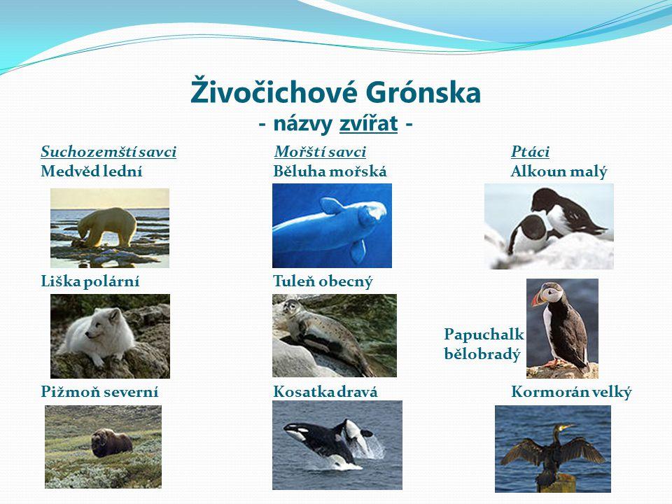 Živočichové Grónska - názvy zvířat -