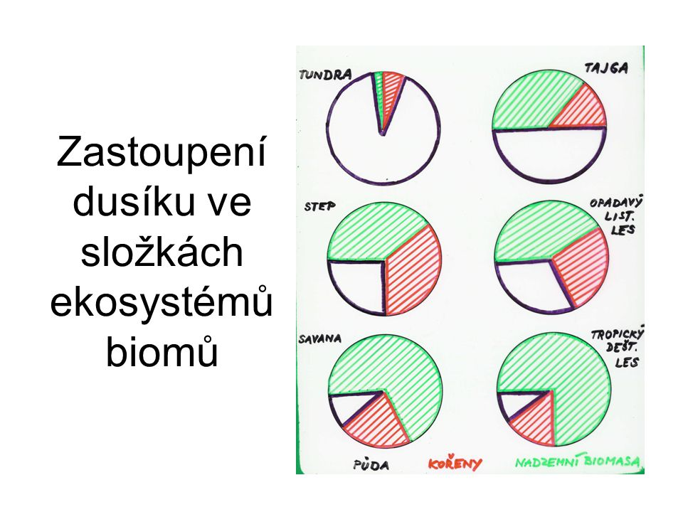 Zastoupení dusíku ve složkách ekosystémů biomů