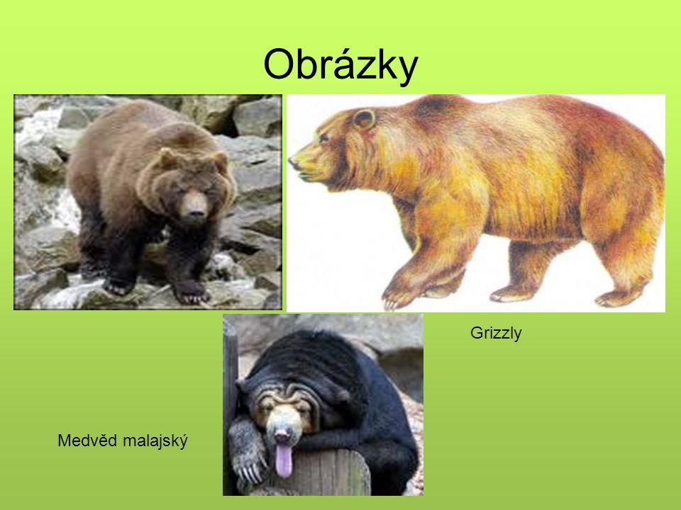 Obrázky grizzly medvěd ušatý Grizzly Medvěd malajský