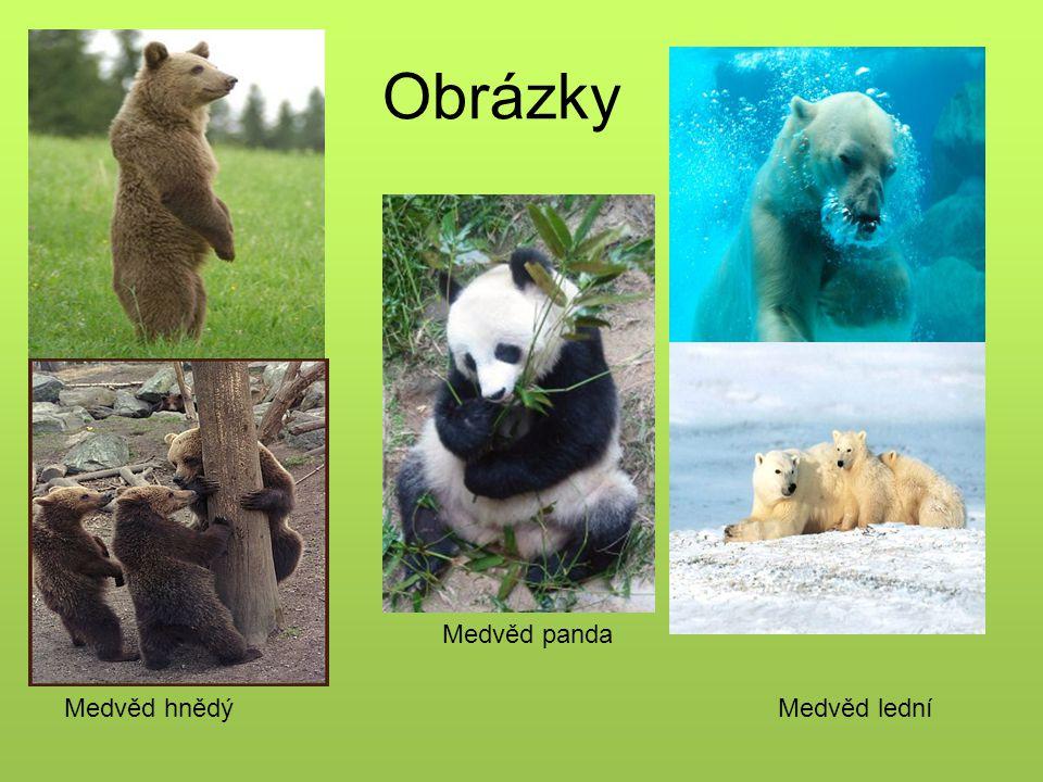 Obrázky Medvěd panda Medvěd hnědý Medvěd lední