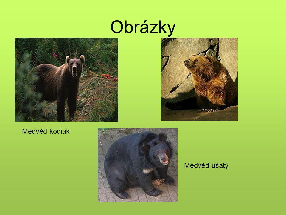 Obrázky Medvěd kodiak Medvěd ušatý