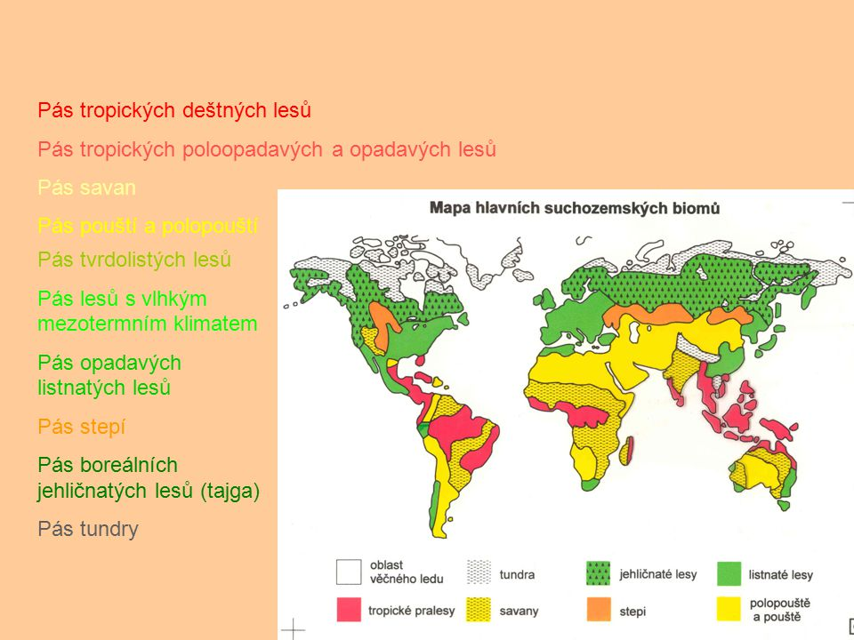 Pás tropických deštných lesů