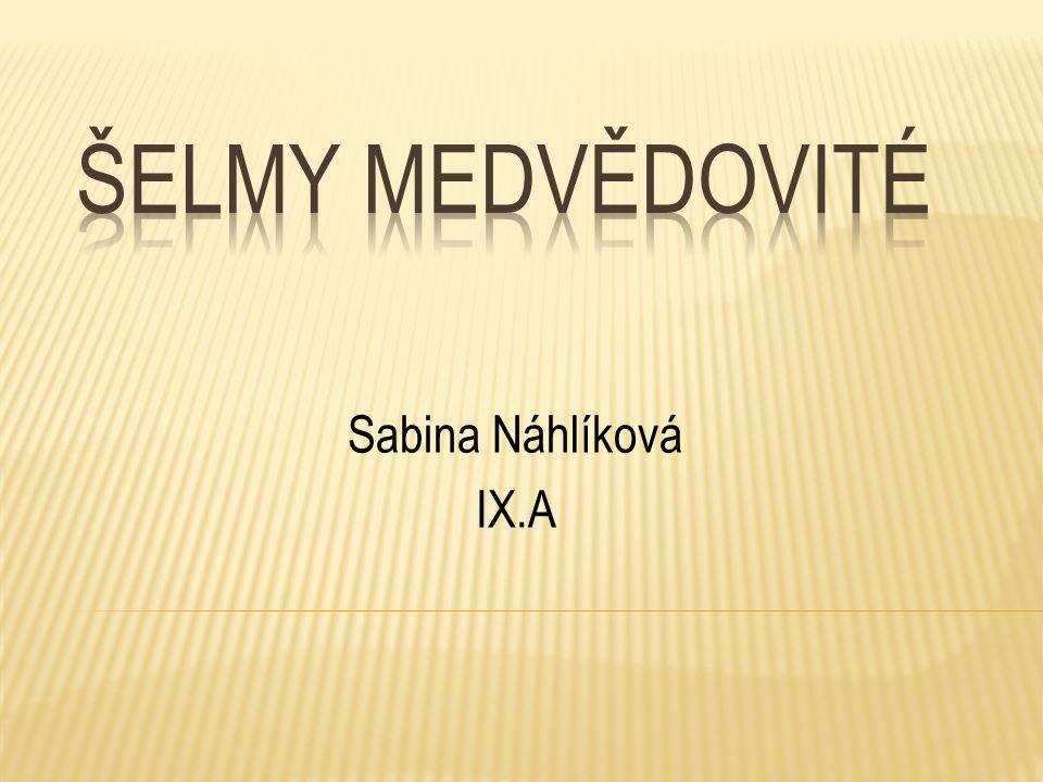 Šelmy medvědovité Sabina Náhlíková IX.A