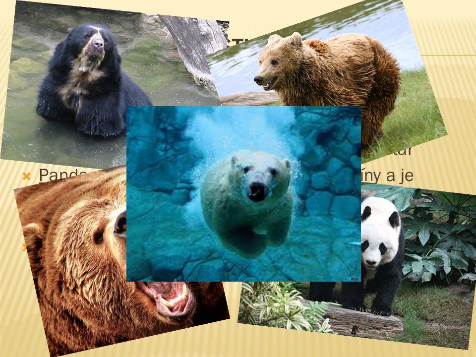 Zástupci Medvěd brýlatý – méně známy druh