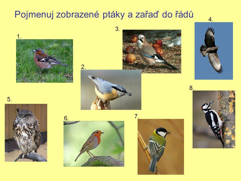 Pojmenuj zobrazené ptáky a zařaď do řádů