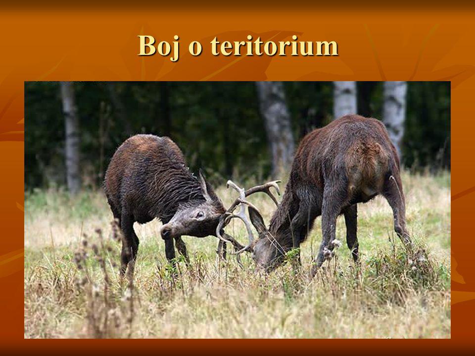 Boj o teritorium