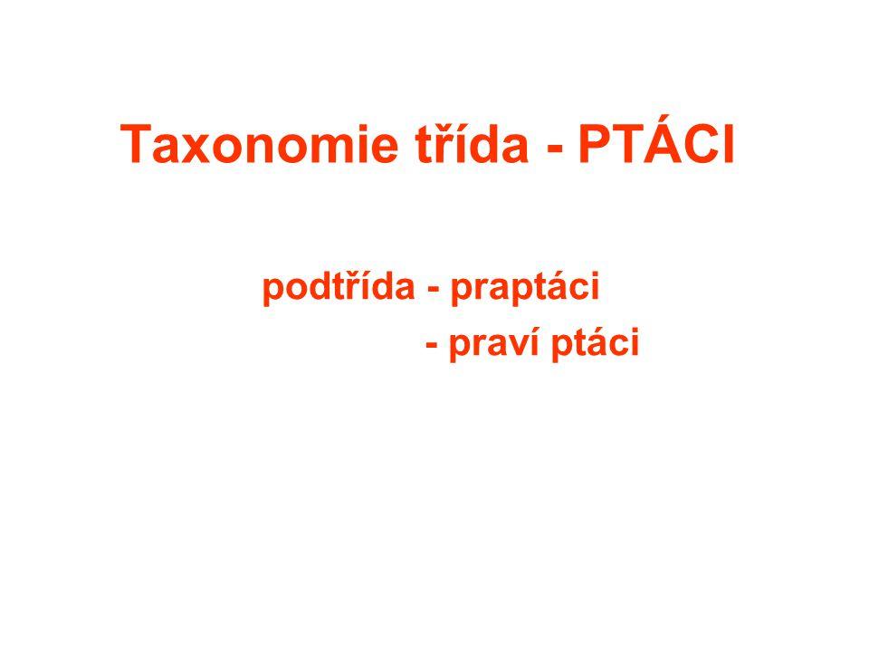 Taxonomie třída - PTÁCI