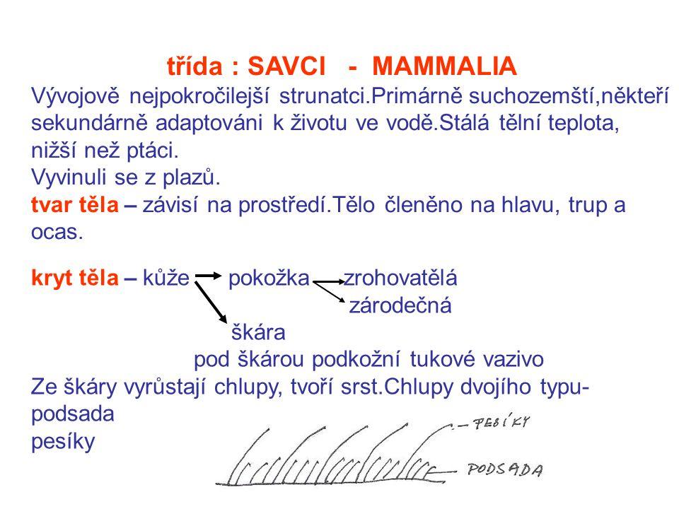 třída : SAVCI - MAMMALIA