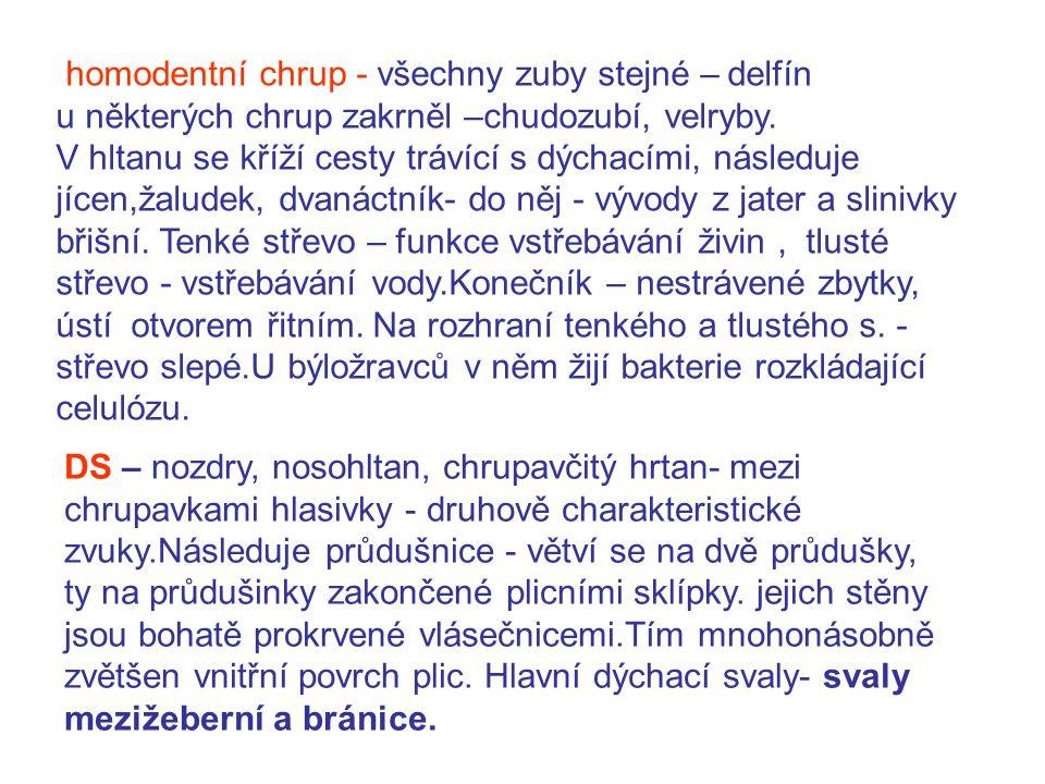 homodentní chrup - všechny zuby stejné – delfín u některých chrup zakrněl –chudozubí, velryby.