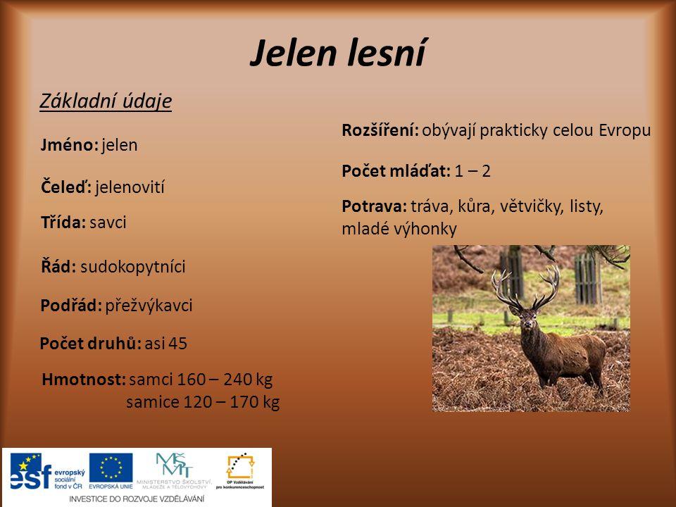 Jelen lesní Základní údaje Rozšíření: obývají prakticky celou Evropu