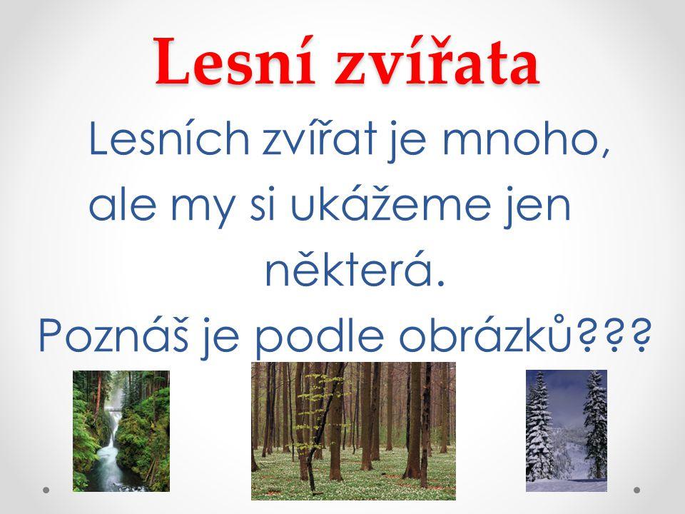 Lesní zvířata Lesních zvířat je mnoho, ale my si ukážeme jen některá. Poznáš je podle obrázků