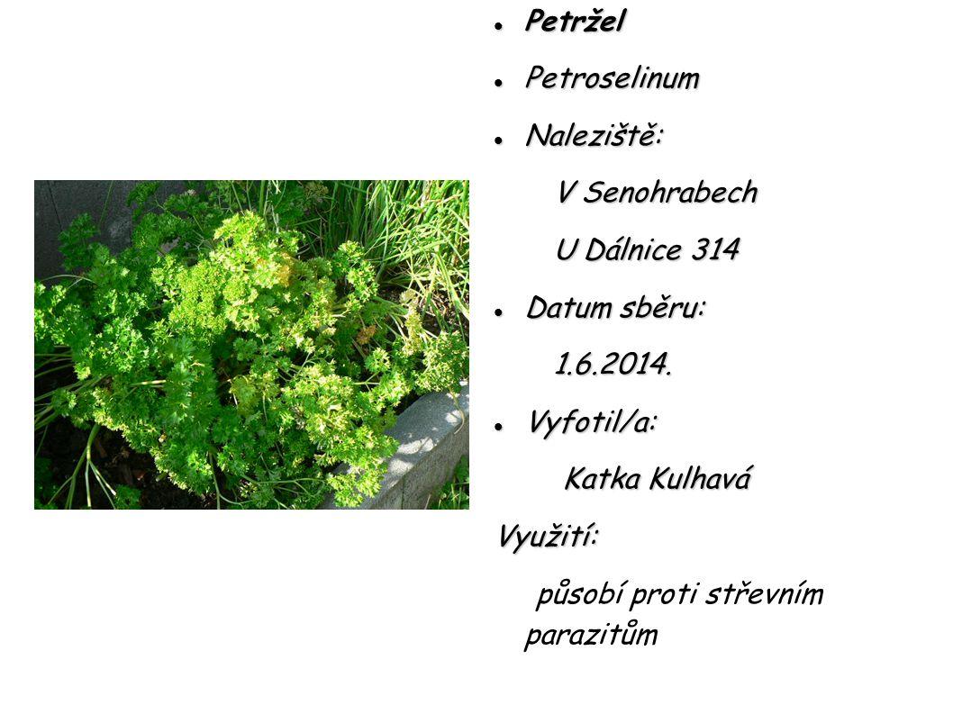 Petržel Petroselinum. Naleziště: V Senohrabech. U Dálnice 314. Datum sběru: 1.6.2014. Vyfotil/a:
