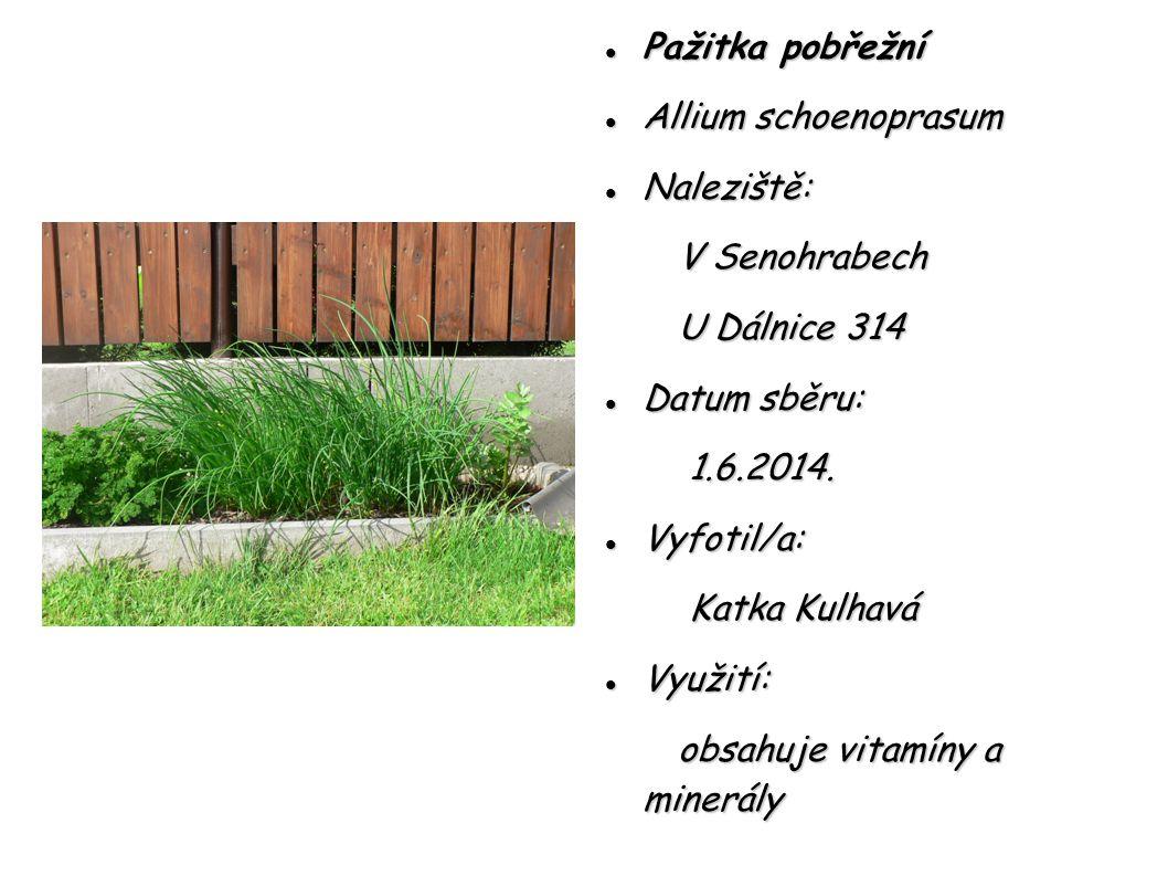 Pažitka pobřežní Allium schoenoprasum. Naleziště: V Senohrabech. U Dálnice 314. Datum sběru: 1.6.2014.