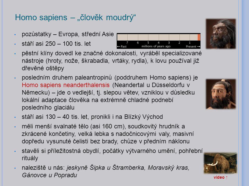 """Homo sapiens – """"člověk moudrý"""