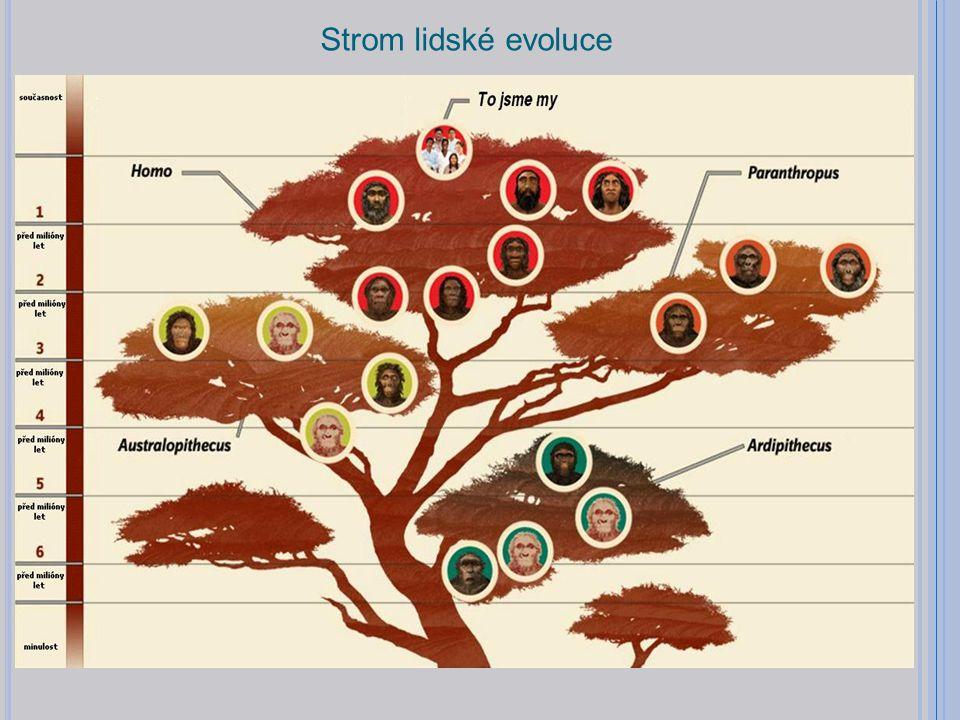 Strom lidské evoluce