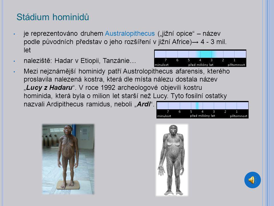 Stádium hominidů