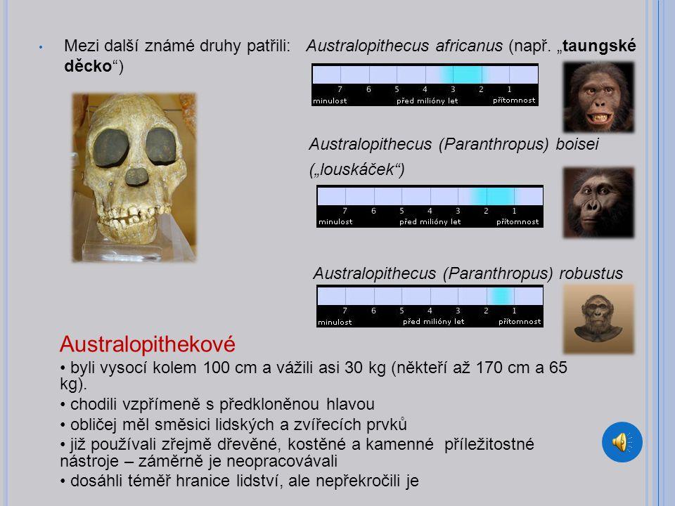 Mezi další známé druhy patřili: Australopithecus africanus (např