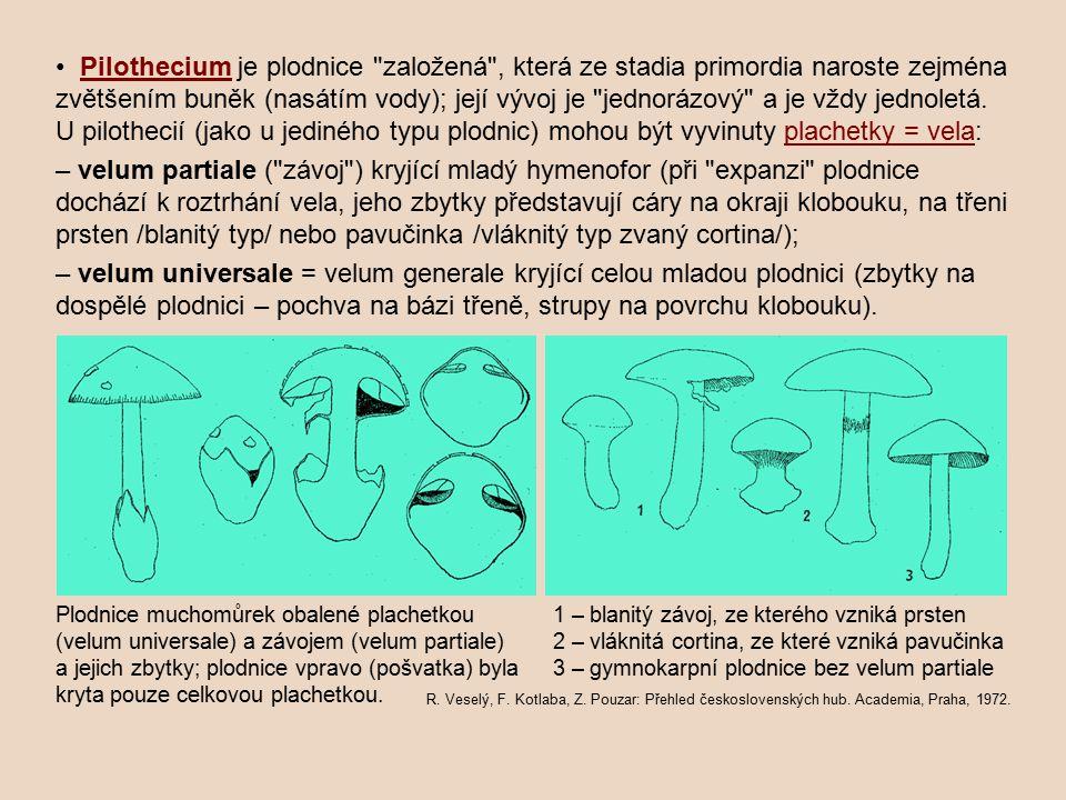 • Pilothecium je plodnice založená , která ze stadia primordia naroste zejména zvětšením buněk (nasátím vody); její vývoj je jednorázový a je vždy jednoletá. U pilothecií (jako u jediného typu plodnic) mohou být vyvinuty plachetky = vela: