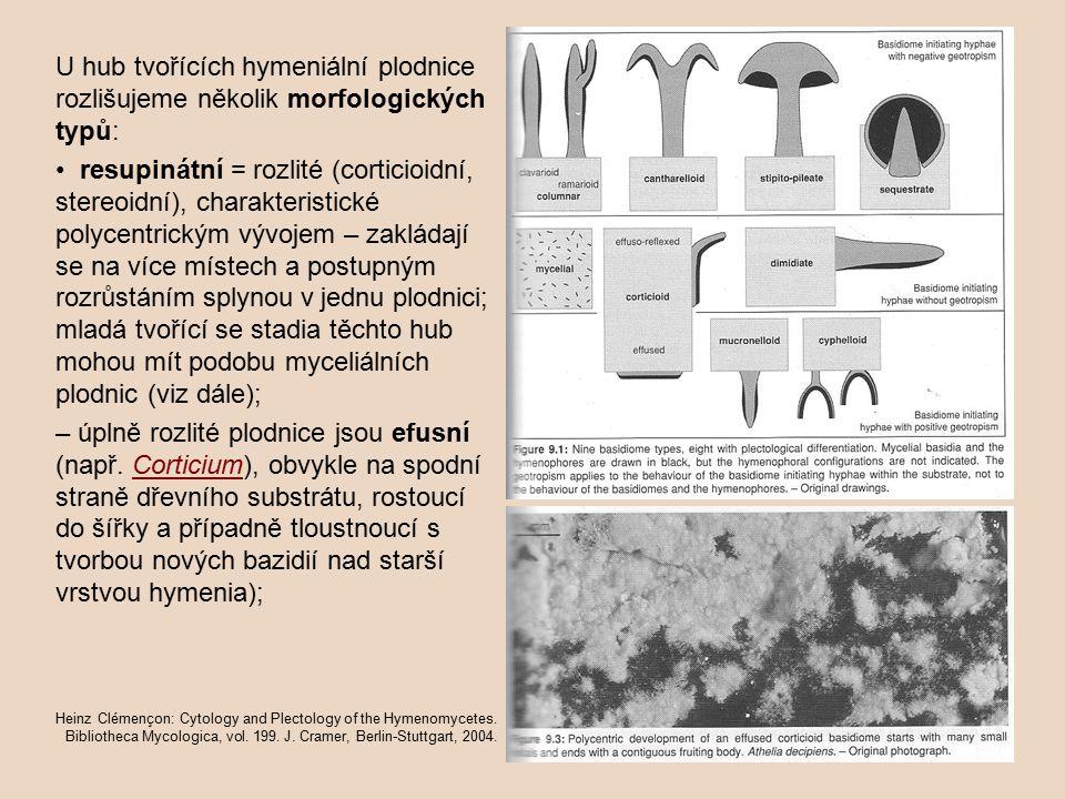 U hub tvořících hymeniální plodnice rozlišujeme několik morfologických typů: