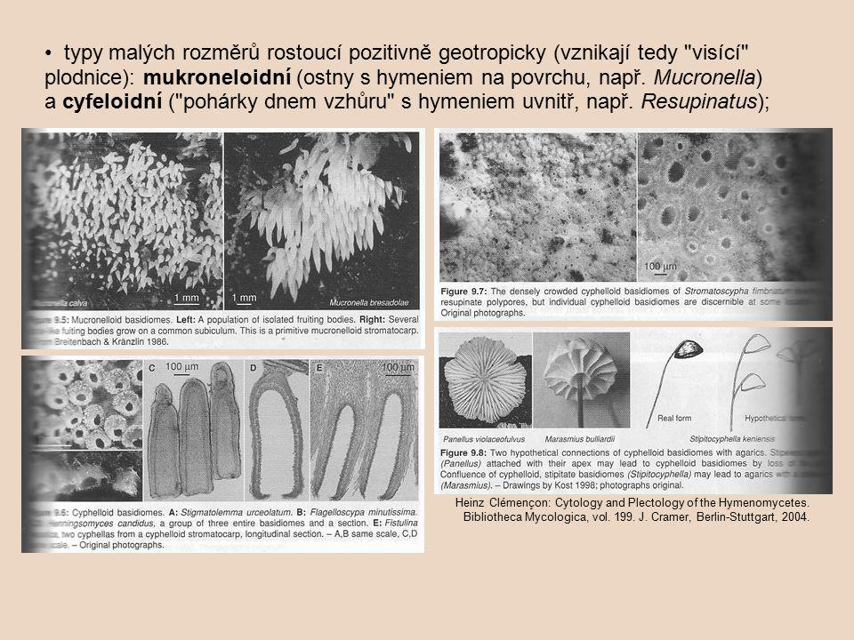 • typy malých rozměrů rostoucí pozitivně geotropicky (vznikají tedy visící plodnice): mukroneloidní (ostny s hymeniem na povrchu, např. Mucronella) a cyfeloidní ( pohárky dnem vzhůru s hymeniem uvnitř, např. Resupinatus);