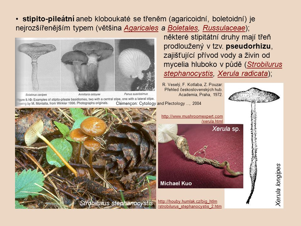• stipito-pileátní aneb kloboukaté se třeněm (agaricoidní, boletoidní) je nejrozšířenějším typem (většina Agaricales a Boletales, Russulaceae);