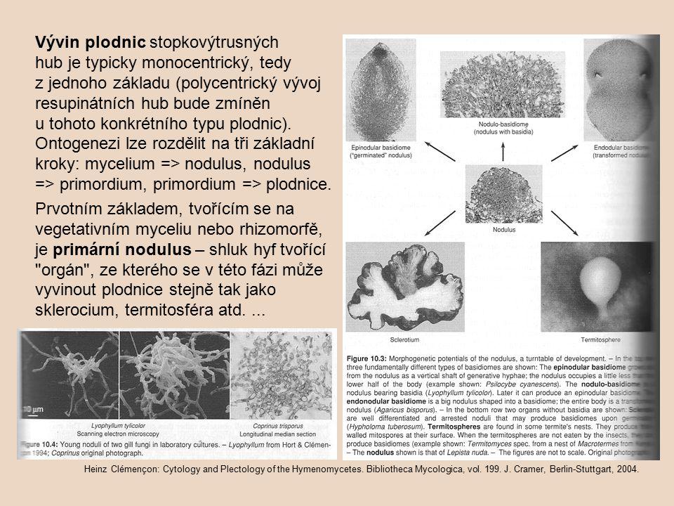 Vývin plodnic stopkovýtrusných hub je typicky monocentrický, tedy z jednoho základu (polycentrický vývoj resupinátních hub bude zmíněn u tohoto konkrétního typu plodnic). Ontogenezi lze rozdělit na tři základní kroky: mycelium => nodulus, nodulus => primordium, primordium => plodnice.