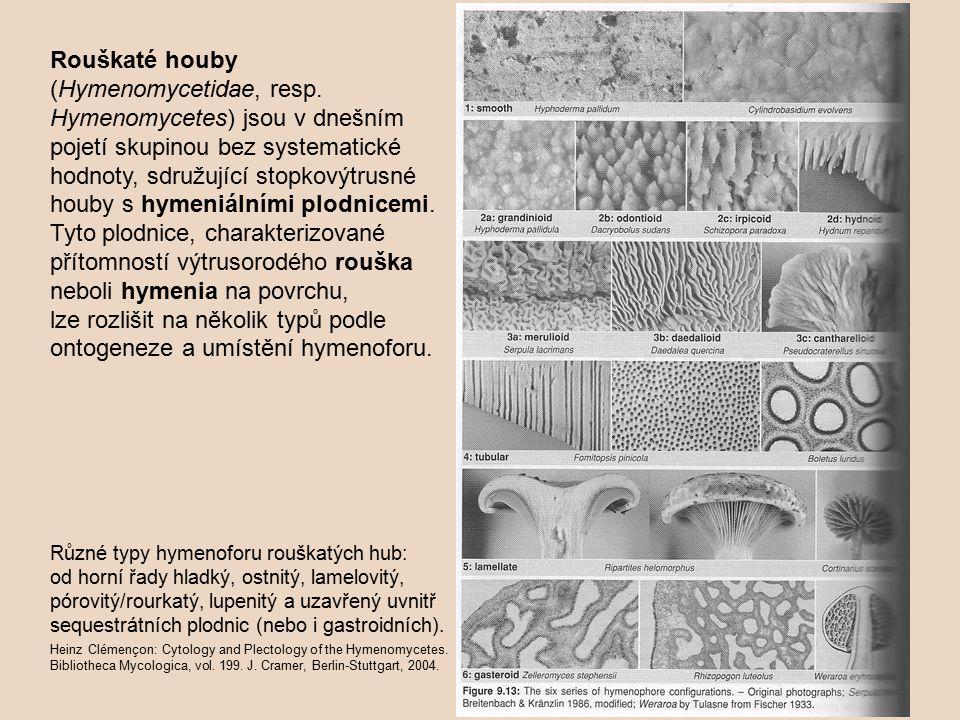 Rouškaté houby (Hymenomycetidae, resp