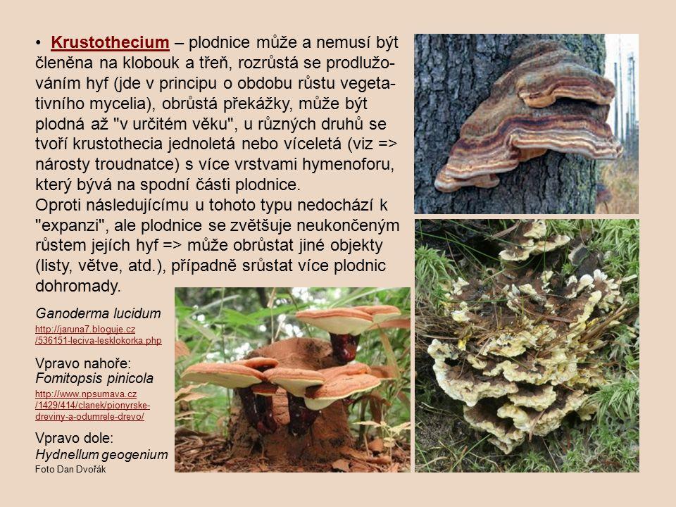 • Krustothecium – plodnice může a nemusí být členěna na klobouk a třeň, rozrůstá se prodlužo-váním hyf (jde v principu o obdobu růstu vegeta-tivního mycelia), obrůstá překážky, může být plodná až v určitém věku , u různých druhů se tvoří krustothecia jednoletá nebo víceletá (viz => nárosty troudnatce) s více vrstvami hymenoforu, který bývá na spodní části plodnice. Oproti následujícímu u tohoto typu nedochází k expanzi , ale plodnice se zvětšuje neukončeným růstem jejích hyf => může obrůstat jiné objekty (listy, větve, atd.), případně srůstat více plodnic dohromady.