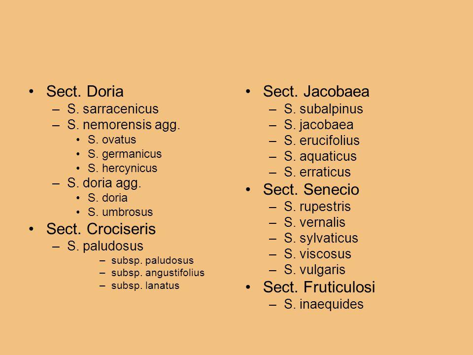 Sect. Doria Sect. Crociseris Sect. Jacobaea Sect. Senecio