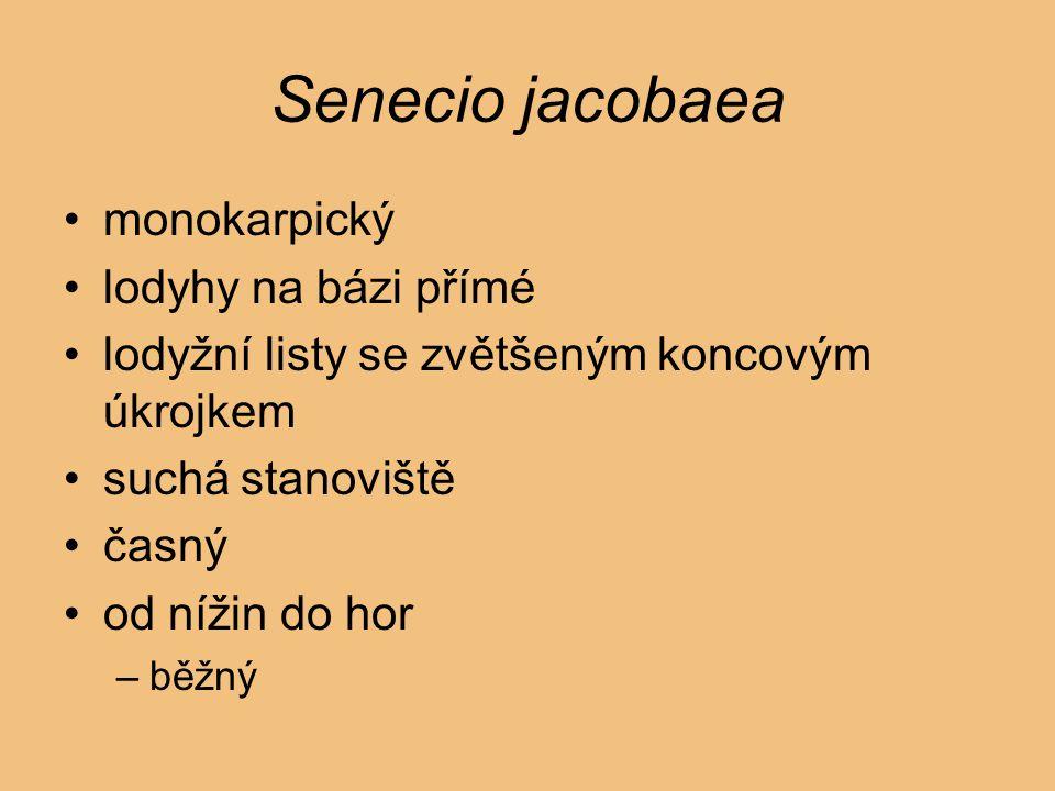 Senecio jacobaea monokarpický lodyhy na bázi přímé