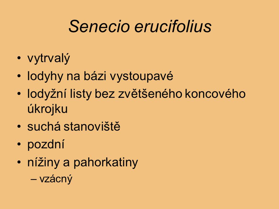 Senecio erucifolius vytrvalý lodyhy na bázi vystoupavé