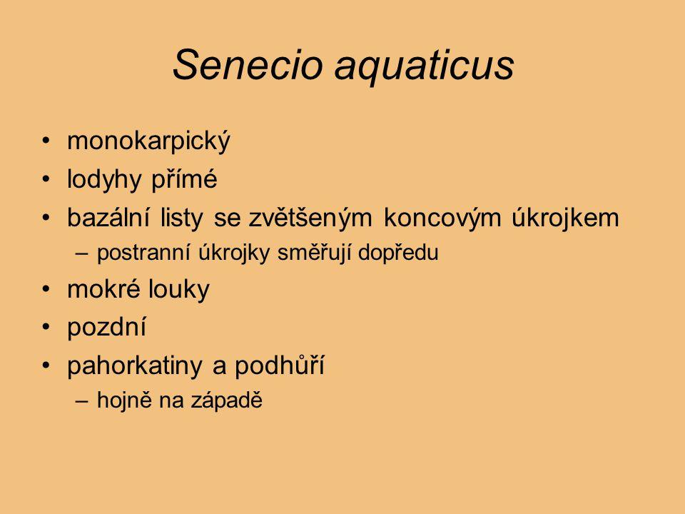 Senecio aquaticus monokarpický lodyhy přímé