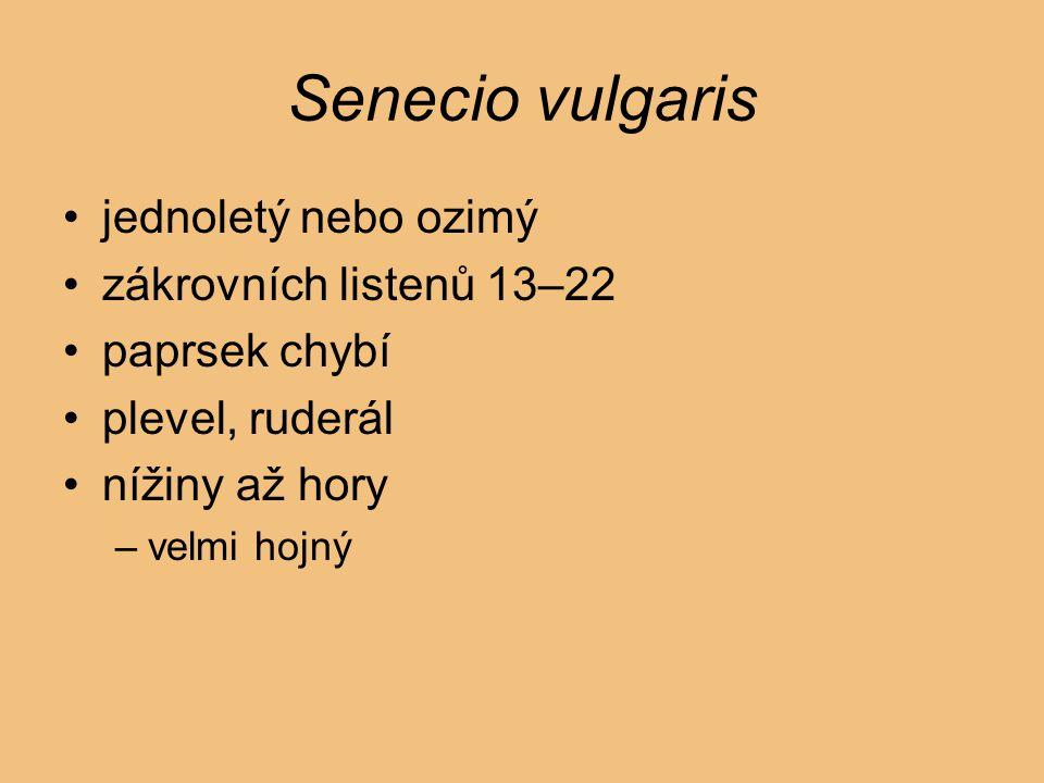 Senecio vulgaris jednoletý nebo ozimý zákrovních listenů 13–22