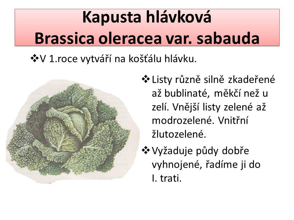 Kapusta hlávková Brassica oleracea var. sabauda