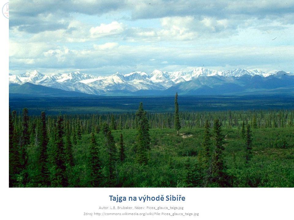 Tajga na výhodě Sibiře Autor: L.B. Brubaker, Název: Picea_glauca_taiga.jpg.