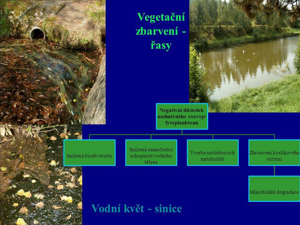 Vegetační zbarvení - řasy